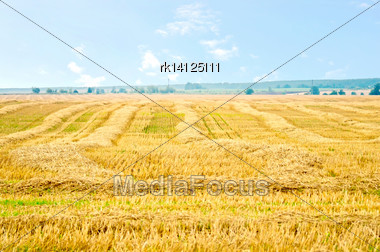 Straw Stripes On The Yellow Background Field Stock Photo