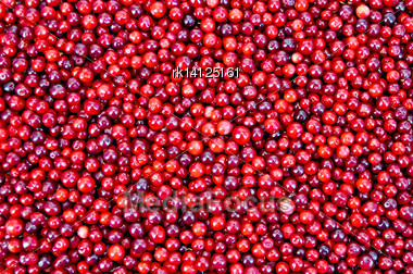Texture Of Ripe Red Berries Lingonberry Stock Photo