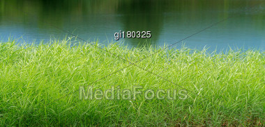 Thickets Of Reeds Against The Background Of The Lake Stock Photo