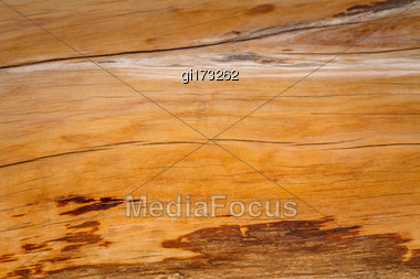 Trunk Of Juniper Without Bark, Close-up Stock Photo