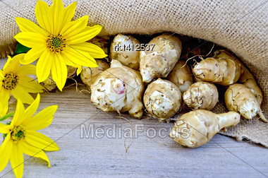 Tubers Of Jerusalem Artichoke And Yellow Flowers On Burlap Background And Wooden Boards Stock Photo