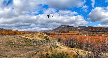 Vineyard On A Background Of Mountains And Sky Stock Photo