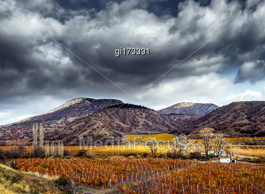 Vineyards. Autumn Valley Against The Background Of Mountains And Sky. HDR Stock Photo