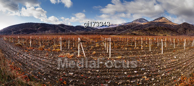 Vineyards. Autumn Valley Against The Background Of Mountains And Sky Stock Photo