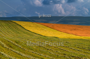 Wheat Field On A Background Of Blue Sky Stock Photo