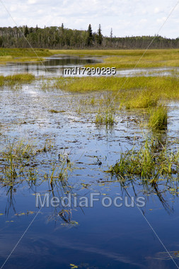 Wild Rice Harvest Saskatchewan Canada North Laronge Stock Photo