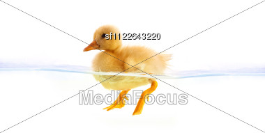 yellow duckling swimming isolated on a white background Stock Photo