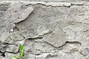 Young Green Sprout On Gray Background Wall Cement. Close-up. Outdoor Photography Stock Photo