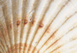 shells clam backgrounds seashell stock image