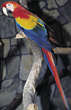 animals zoo parrot feathers birds macaw stock photography