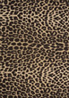 snake fur leather skin stock photography