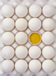 broken eggyolk backgrounds white dairy yellow stock photography