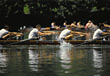 water aquatic rowing racing crew canoe stock photography