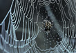 spiderweb insects stock image