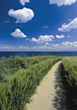 Beaches shore countryside beaches paths nature summer stock photography
