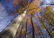 spiritual autumn fall trees big tall stock image