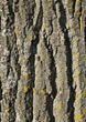 Wood Backgrounds treebark ridges wooden backgrounds brown backgroundimages stock image