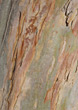 wood oak backgrounds beech pine maple stock photo