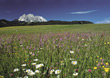 valleys summer flowers landscapes spring fields stock photo