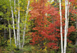 autumn fall trees forest stock image