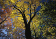 autumn fall trees stock photography