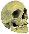 skull medical science healthcare stock photography