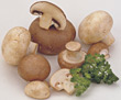 raw vegetables mushrooms produce stock photography