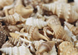 shells backgrounds beige seashell stock photo