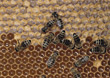 hive bugs bee bumble insect honeycomb stock photo