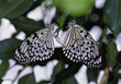 butterfly bugs wings white insect black stock photo