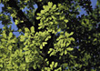 leafs nature green backgrounds branch trees stock photography