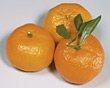 citrus fruits tropical clementines produce stock photo