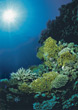 coral sealife reef underwater stock photography