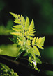 fern nature spiritual green background plants stock photo