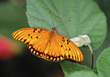 butterfly orange wings bug insects leaves stock photo