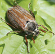 bug insects beetle stock photo