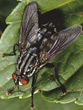 fly pest bug insects stock photo