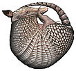 3D Digital Render Of A Armadillos, A New World Placental Mammal With A Leathery Armor Shell, Isolated On White Background