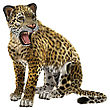 3D Digital Render Of A Big Cat Jaguar Jumping Isolated On White Background
