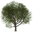 Bark 3D Illustration Of A Of A Green Ash Tree Isolated On White Background stock illustration