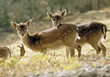 wild fawns wildlife woods mammal deer stock photo
