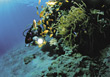 diver explore coral reef underwater fish stock photo