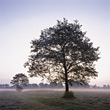 foggy dawn tree nature spiritual fall stock photo
