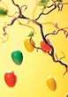 eastereggs Easter colorful decoration backgrounds branch stock image