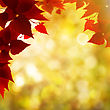 Abstract Autumnal Backgrounds With Beauty Bokeh And Maple Foliage stock photo