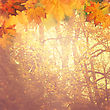 Abstract Autumnal Backgrounds For Your Design stock illustration