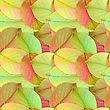 Abstract Background Of Autumn Green, Yellow And Orange Leafs. Seamless Pattern For Your Design. Close-up. Studio Photography.