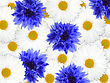 Abstract Background Of Blue And White Flowers For Your Design. Close-up. Studio Photography. stock photo