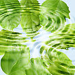 Abstract Background Of A Green Leaf Under Blue Water. Close-up stock image
