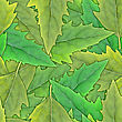 Abstract Background Of Green Leafs. Seamless Pattern For Your Design. Close-up. Studio Photography.